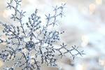 fleischfressende Pflanzen im Winter
