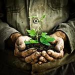 fleischfressende Pflanzen pflegen