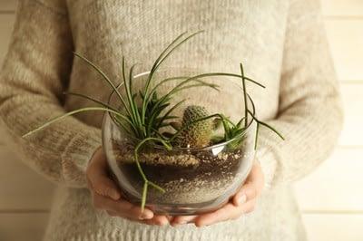 Pflanzenterrarium für fleischfressende Pflanzen